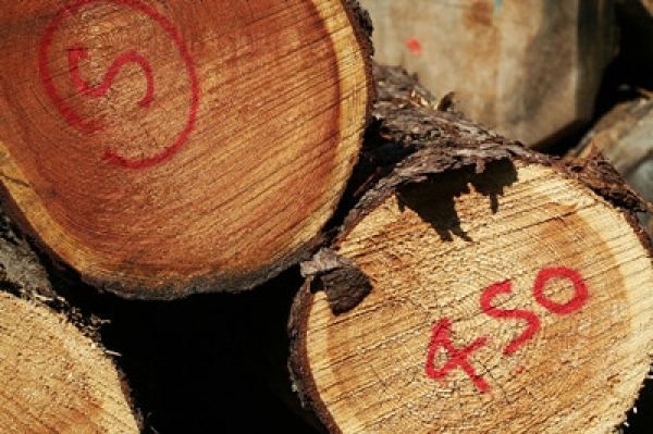 Neutral Outlook For Malaysian Timber Sector In 2015