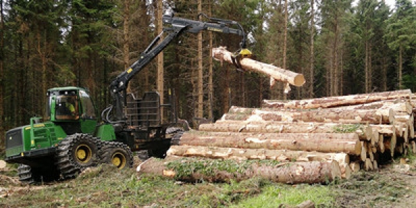 Evaluating The Sustainability Of EU Timber Consumption Trends