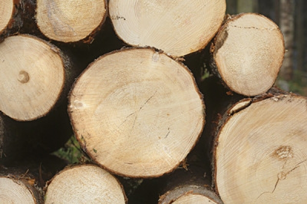 German Softwood Imports Up Tenfold