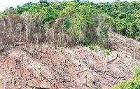 Causes And Suggestion For Deforestation In Malawi
