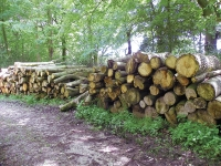 Weather Affecting Malaysia's Log Exports