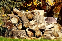 Global Timber Market Update