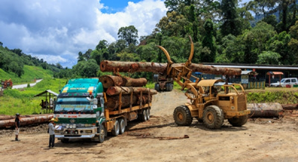 Vietnam Faces Illegal Logging Activities