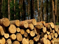 Finnish Sawnwood Exports Expected to Increase in 2017