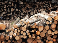 Tropical Timber Market Report I