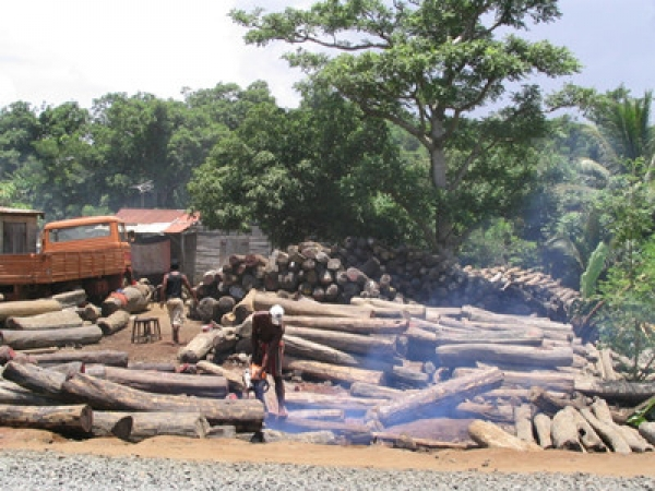 China's Forestry Industry Implements Massive Reforms