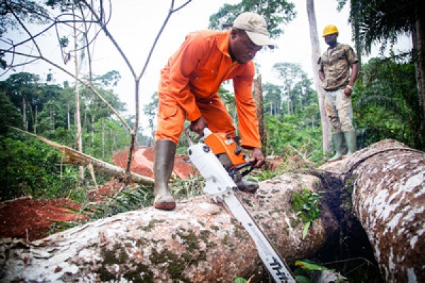 WWF And Rougier To Jointly Advance Responsible Forest Management