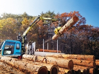 Tropical Timber Needs More Cooperation